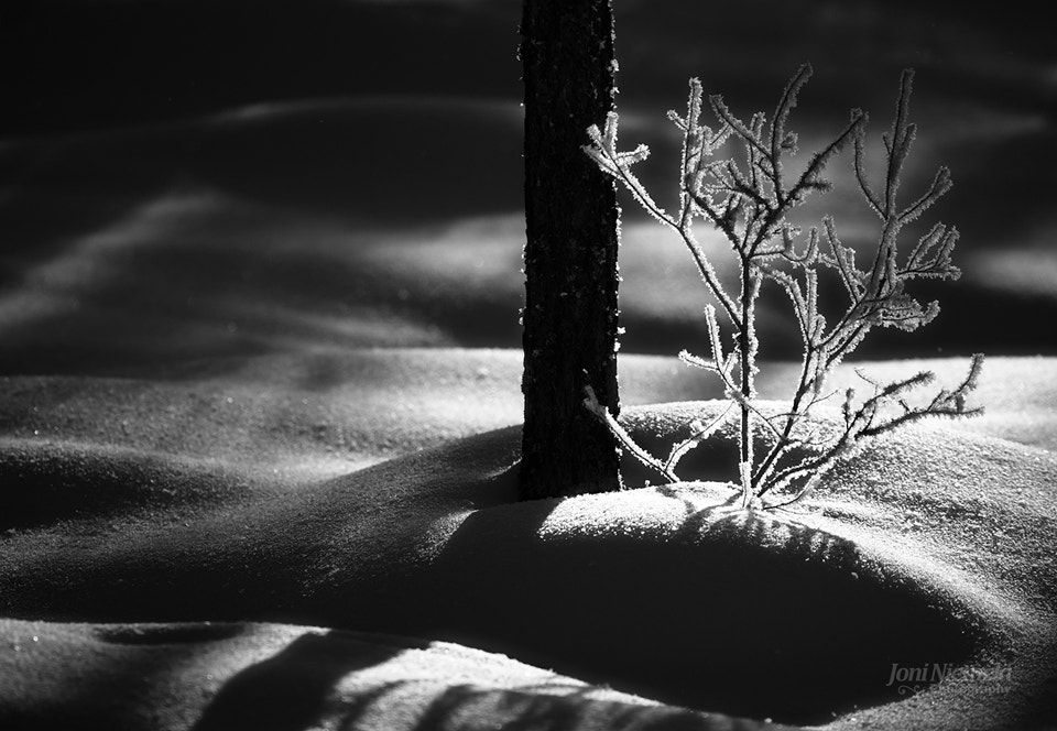 Photograph Tree And Snowbanks by Joni Niemelä on 500px