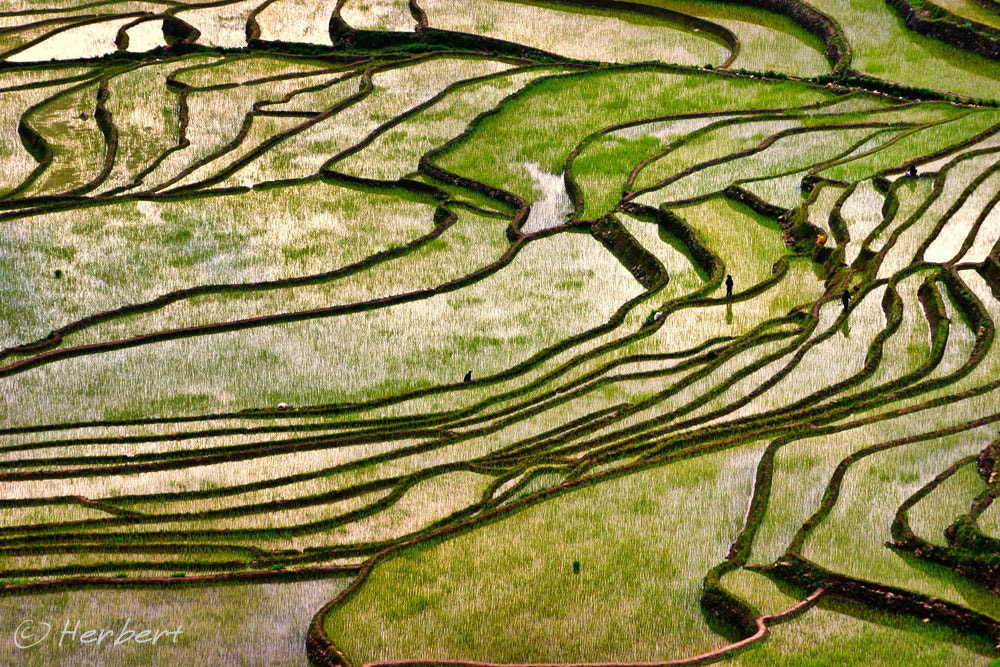 Photograph Harvest time by Herbert Wong on 500px