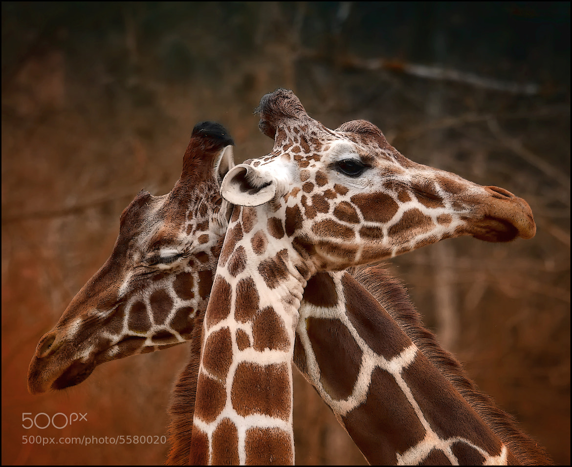 Photograph love by Sonja Probst on 500px
