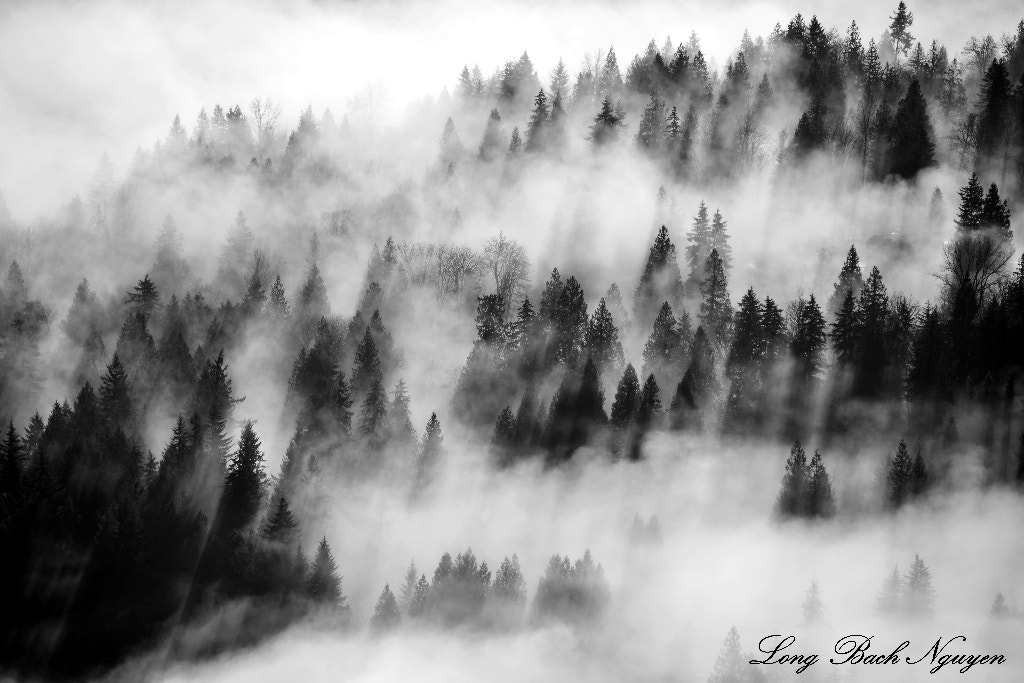 Photograph Aerial foggy forest, Fall City, Washington by Long Bach Nguyen on 500px