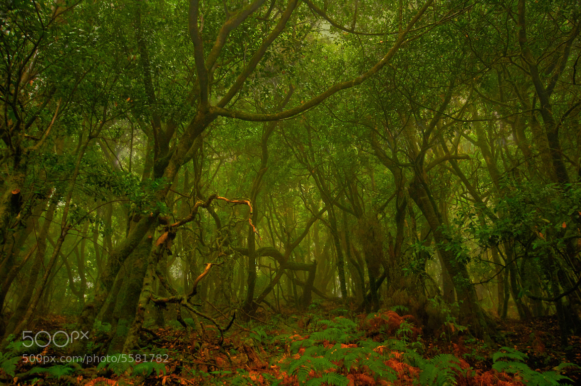 Photograph The mysterious forest by Jose Antonio Montoya on 500px