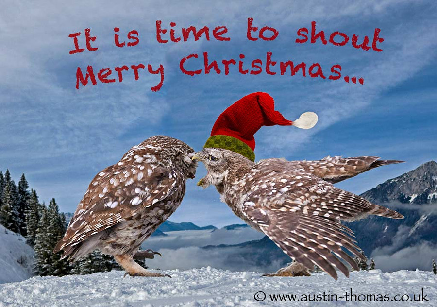 Merry Christmas - Little Owl style...
