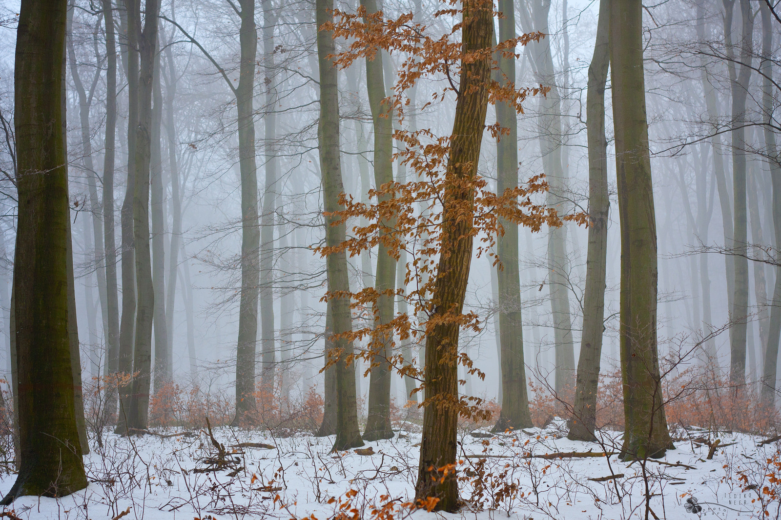 Photograph I'm a Woman by Ildiko Neer on 500px