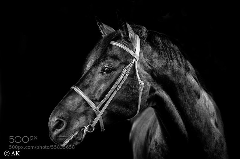 Photograph horse by Ali Karimi on 500px