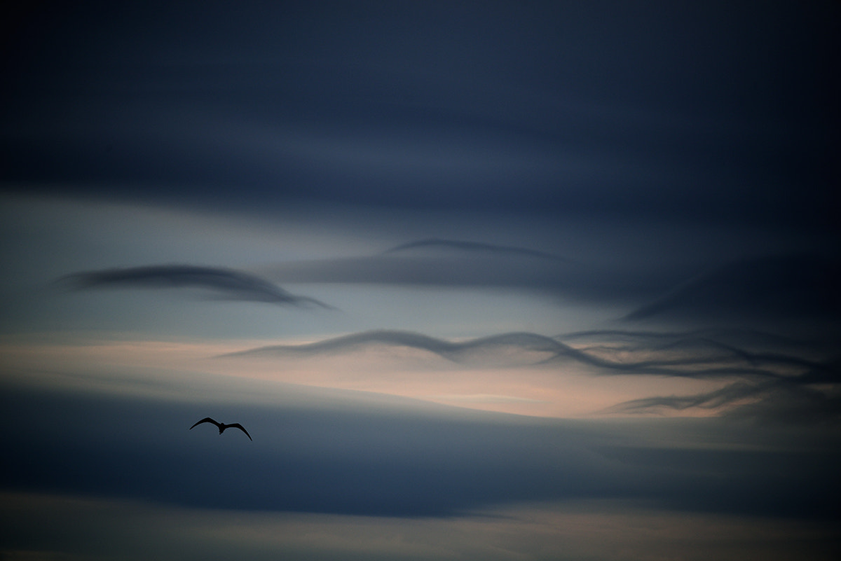 Photograph Fly by Bogdan Panait on 500px