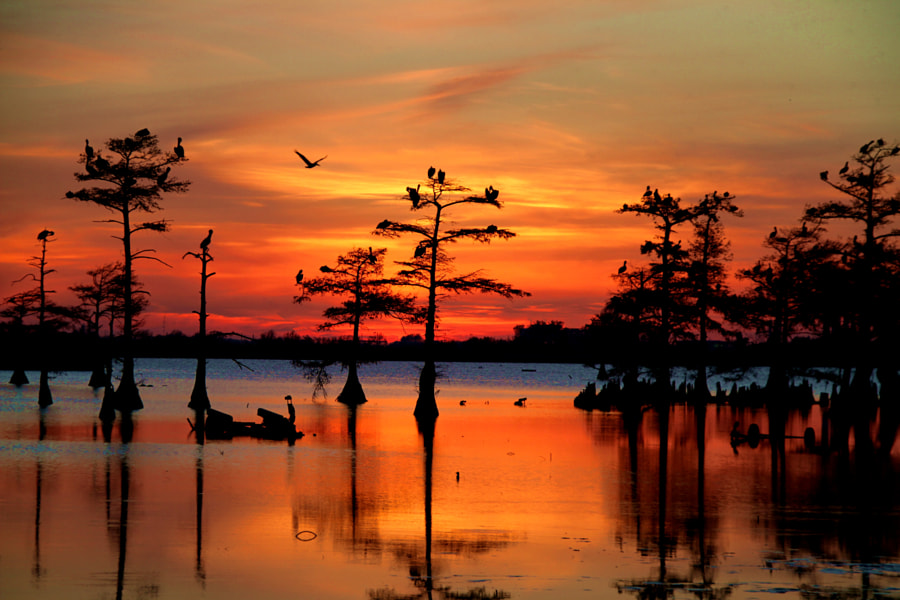 Sunset on the Bayou by Carey Chen on 500px.com