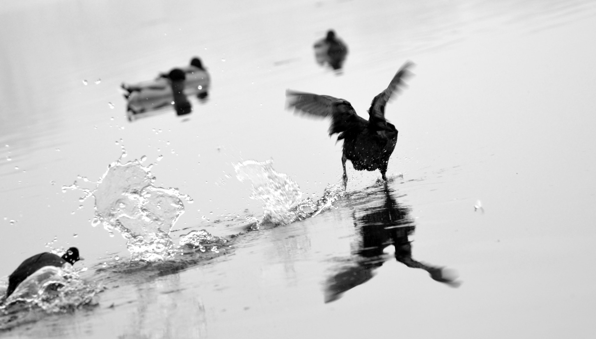 Photograph Duck race by Mathia Pinato on 500px