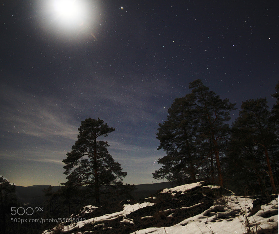 pine forest in the moonlight by Maxim Tashkinov on 500px.com
