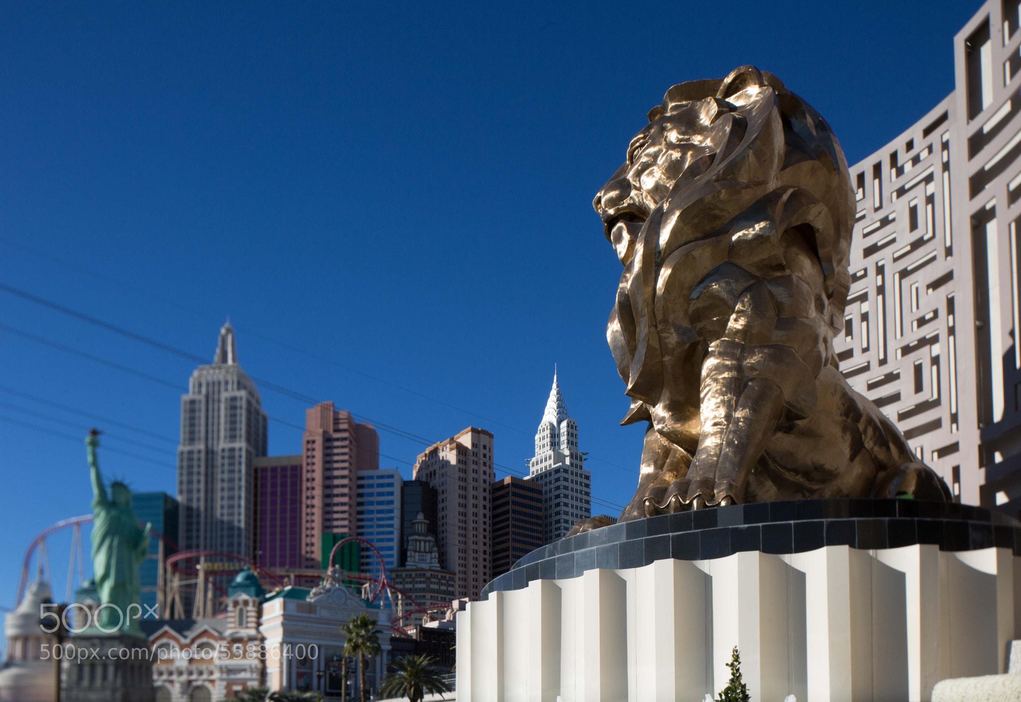Photograph MGM by Gustavo Avila-Ortiz on 500px