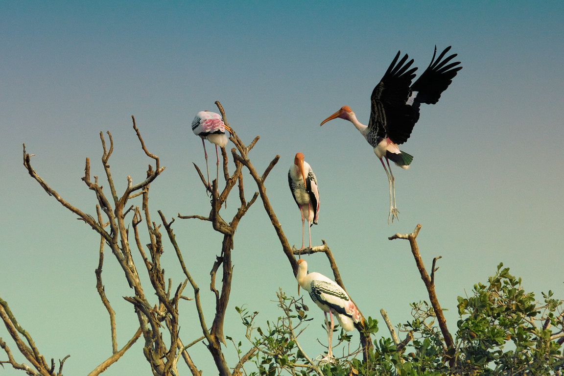 Photograph Painted stork returns home! by Vinoth Chandar on 500px