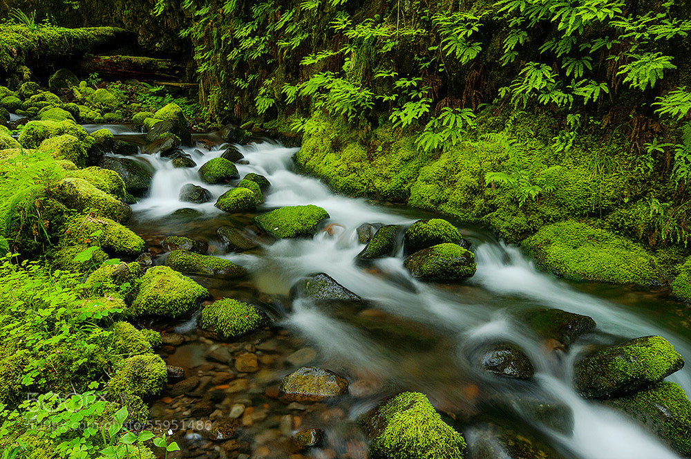 Photograph Fern Canyon by Rick Lundh on 500px