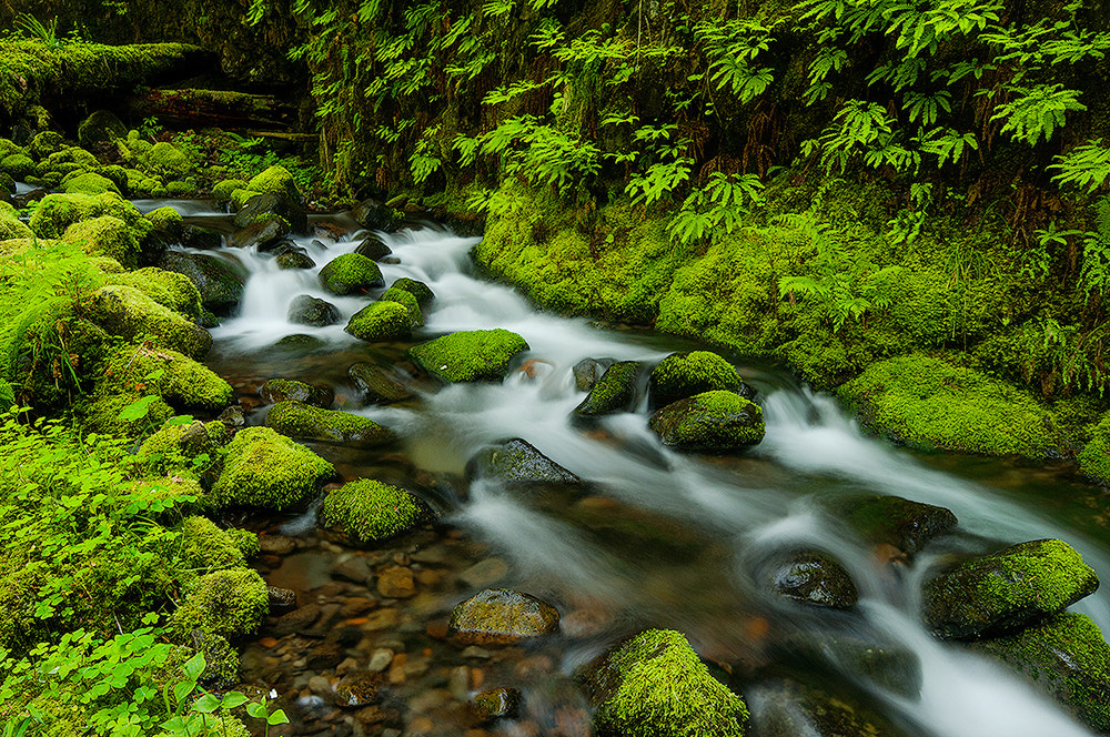 Photograph Fern Canyon by Henrik Anker Bjerregaard  Lundh III on 500px