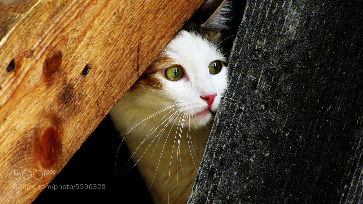 Photograph Cat by Konstantin Shestak on 500px