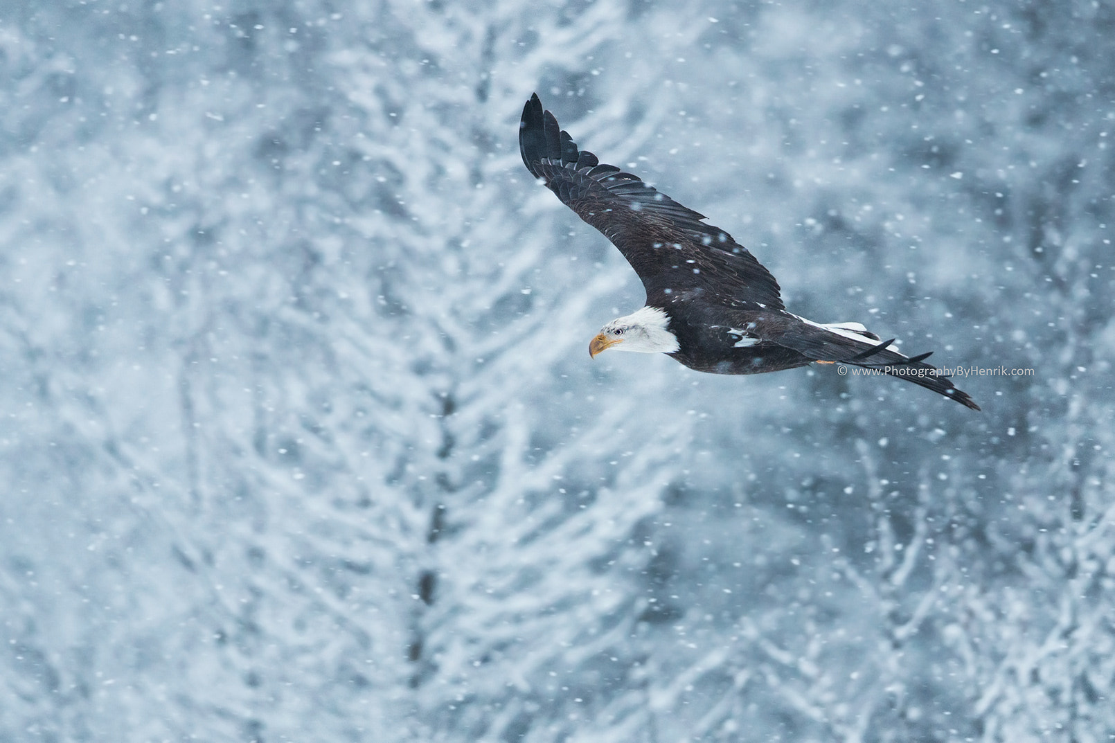Photograph Winter is Here by Henrik Nilsson on 500px