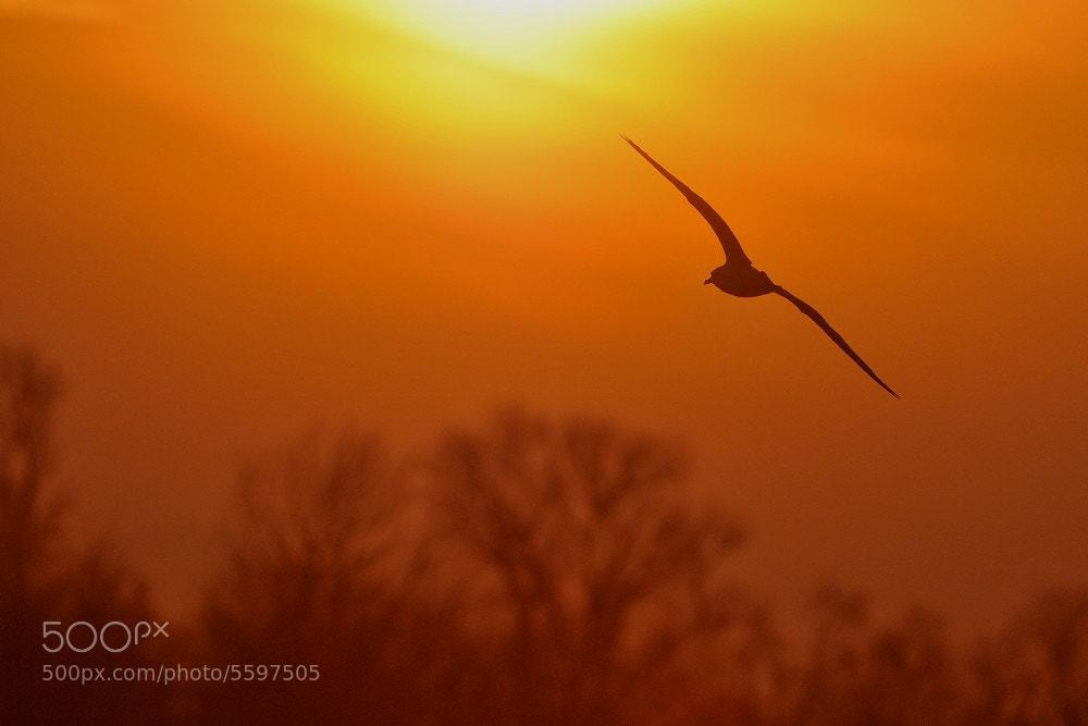 Photograph TOWARDS THE SUN by Miran Krapež on 500px