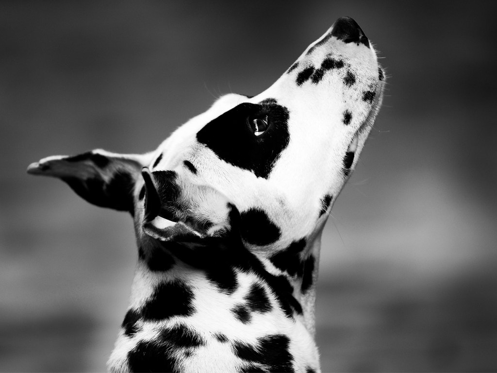 Photograph i am black and white by sushan shrestha on 500px