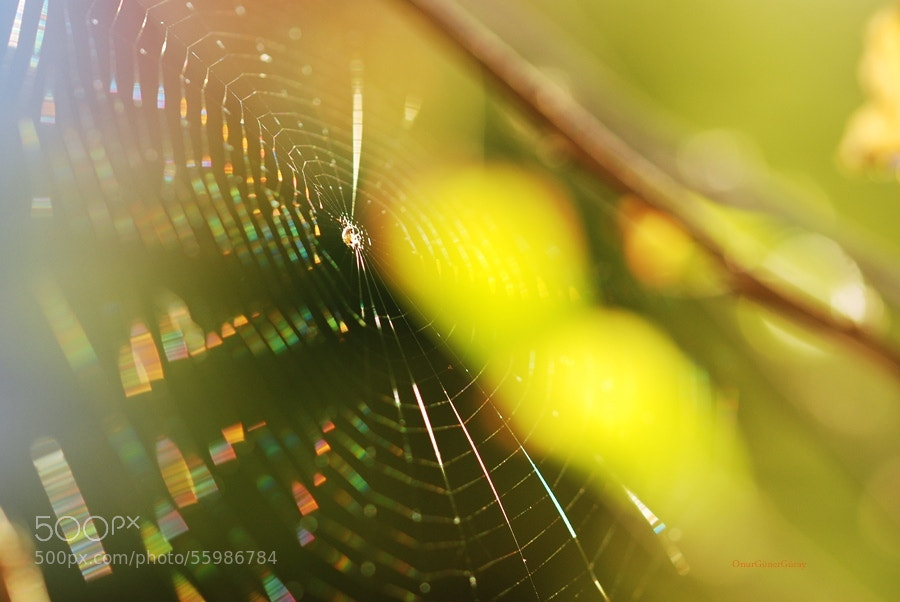 Photograph Cobweb in the rainbow by Onur Güner Güray on 500px