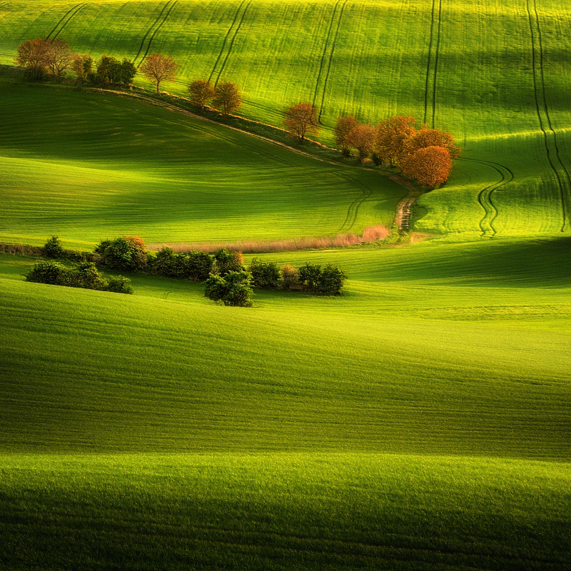 Photograph Green Fields... by Pawel Kucharski on 500px