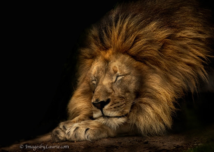 Photograph Sweet Dreams by Laurie Rubin on 500px