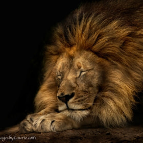 Sweet Dreams by Laurie Rubin (imagesbylaurie)) on 500px.com