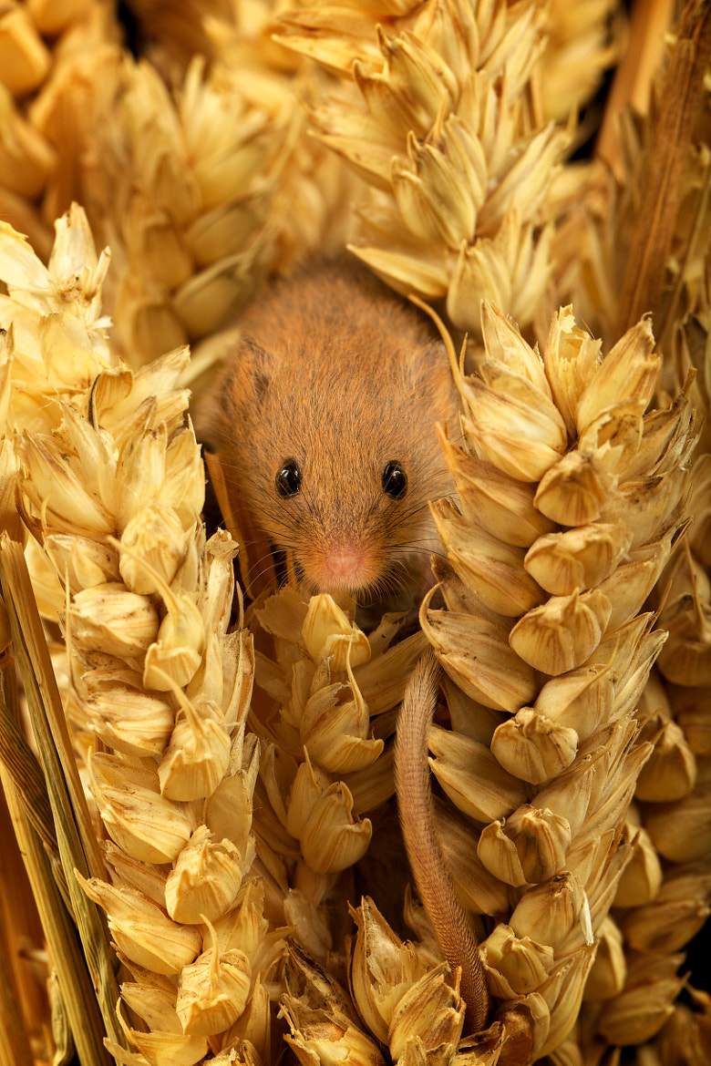 Photograph is it safe yet? by Mark Bridger on 500px