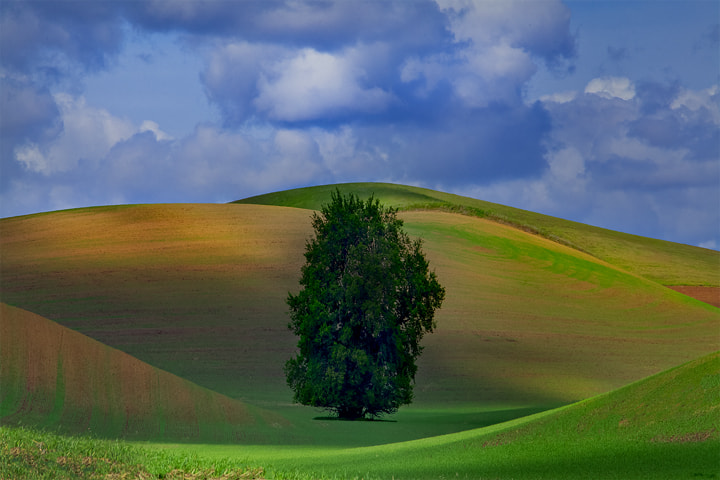 Photograph Palouse Greens And Rolling Hills by Kevin McNeal on 500px
