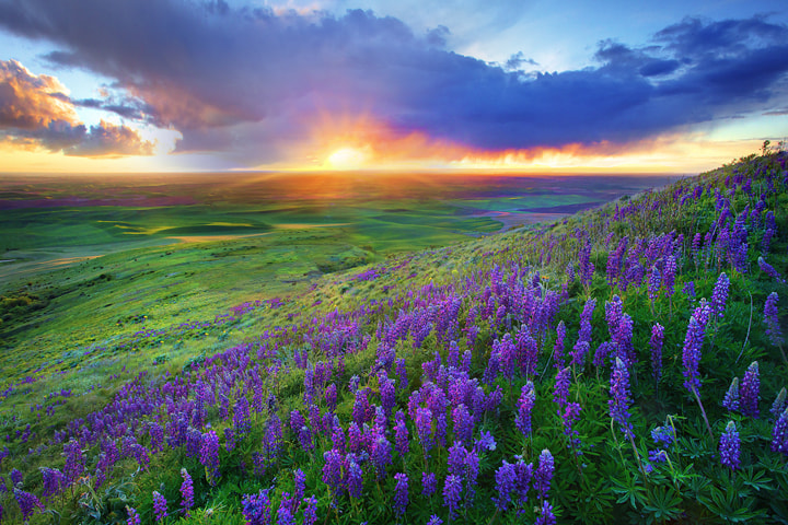 Photograph Last Moments From The Palouse by Kevin McNeal on 500px