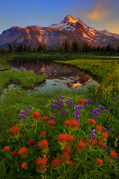 Photograph Summer Wildflowers At Jefferson Park by Kevin McNeal on 500px