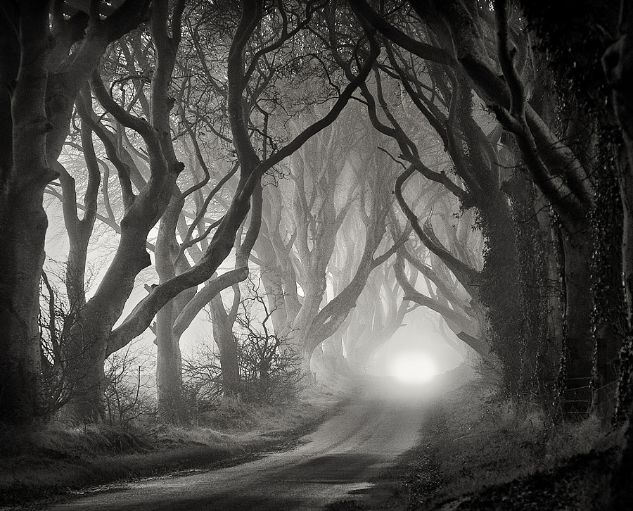 The Dark Hedges by Gary McParland on 500px.com