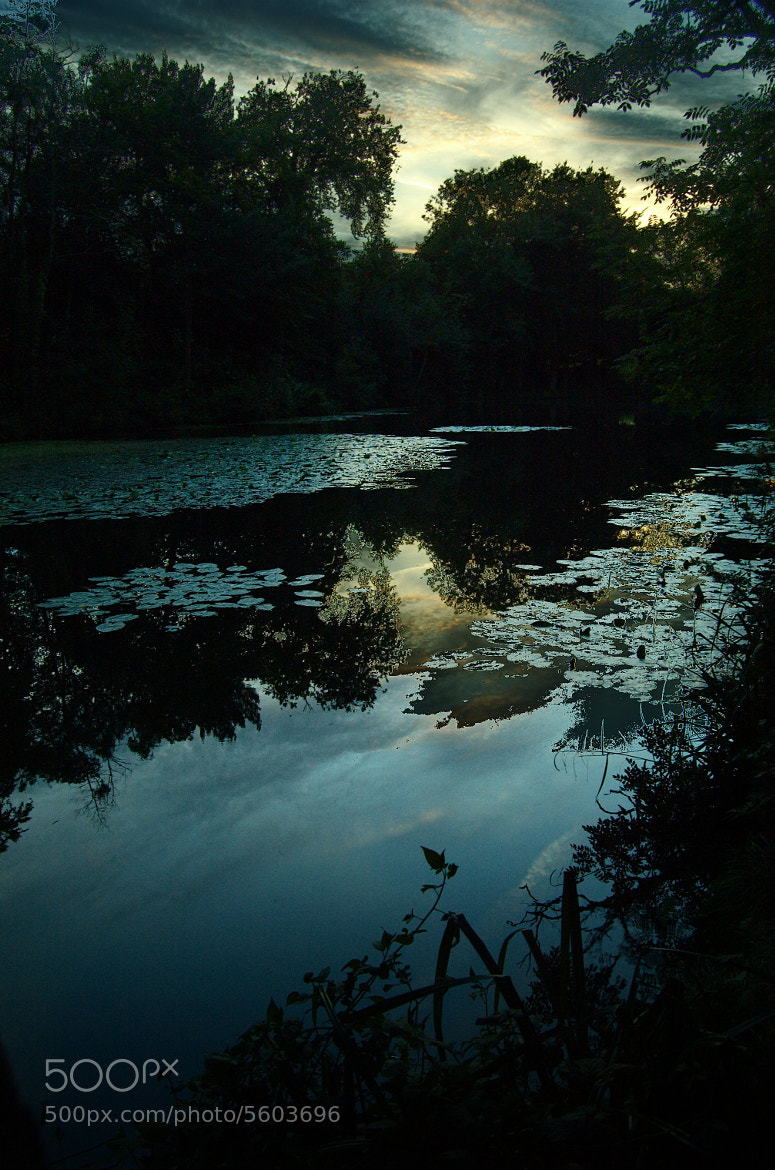 Photograph Sunset with Lilypads by Nathan DeGargoyle on 500px