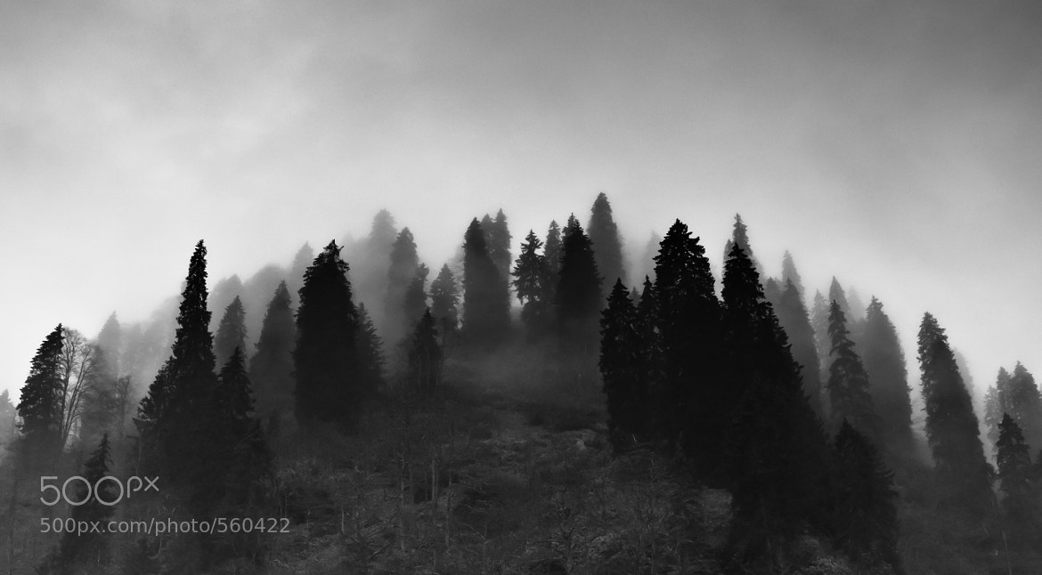 Photograph Fog and trees by archiey on 500px