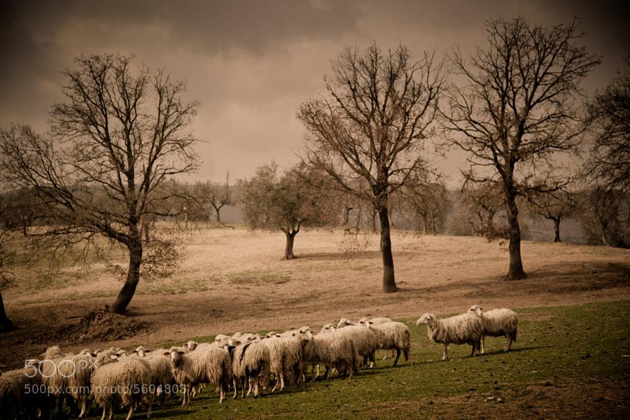 Pasture by David Butali (DavidButali) on 500px.com