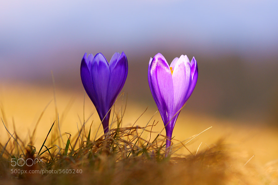 Photograph Twins by Janez Tolar on 500px