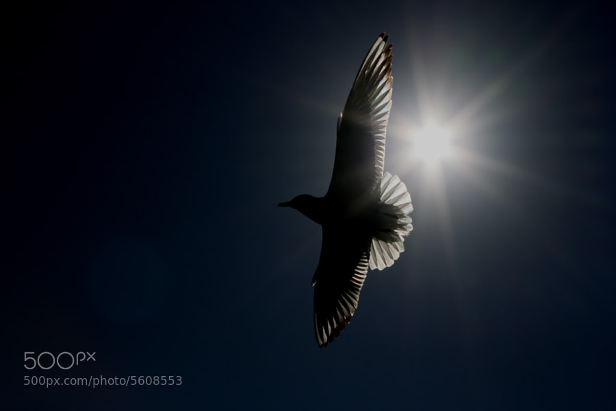 Photograph inverted gull light by adnan basaran on 500px