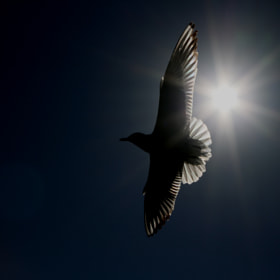 inverted gull light by adnan basaran (excuseme)) on 500px.com
