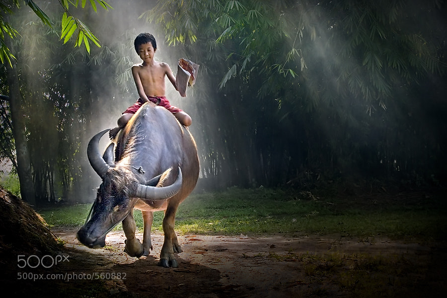 Photograph A Boy and a Buffalo by Jeffry Surianto on 500px