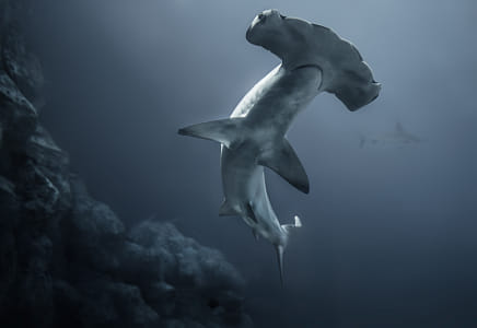 Hammerhead Shark by Natta Summerky on 500px
