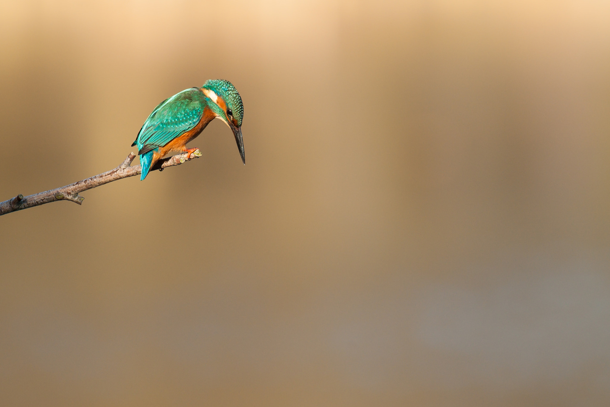 Photograph Fishing on a sunny day by Heikki Put on 500px