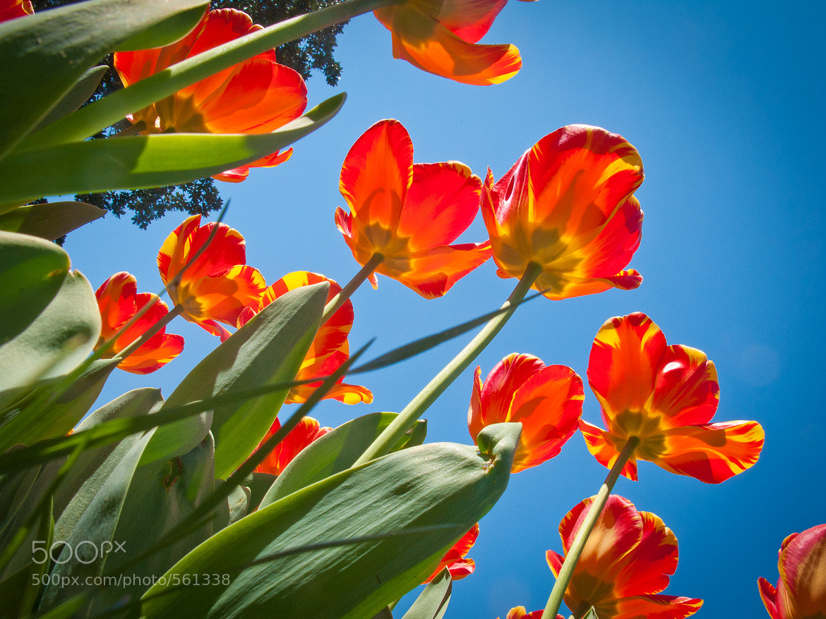 Photograph Flowers by Phillip Guyton on 500px