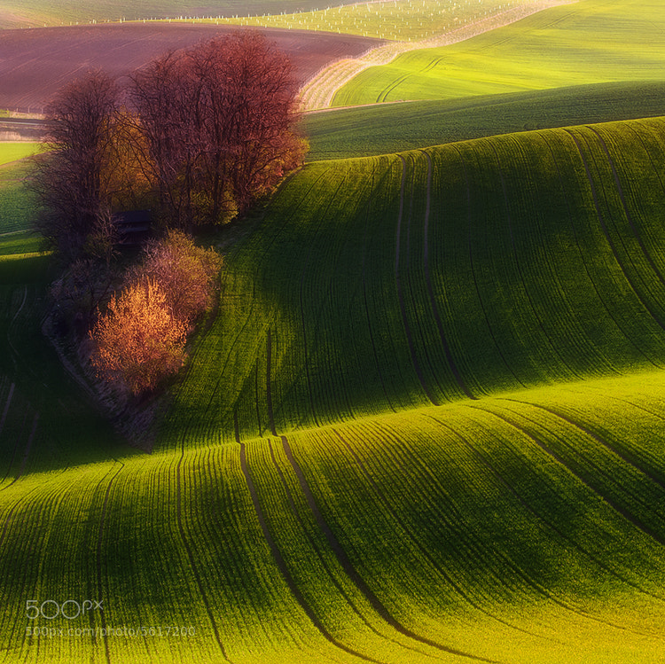 Photograph Green fields by Piotr Krol on 500px