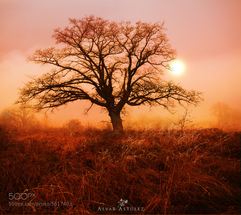 Photograph Naked tree by Alvar Astúlez on 500px