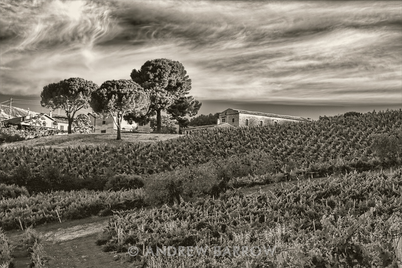 Photograph The Winery, Vines and Vineyards of Tasca d'Almerita, Sicily by Andrew Barrow ARPS on 500px
