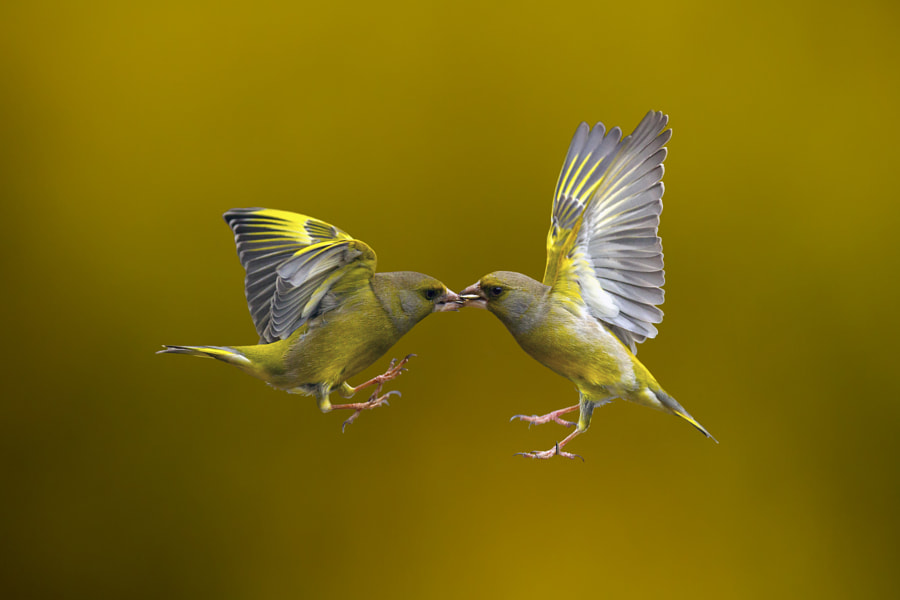 Flying Kiss 14 by Marco Redaelli on 500px.com