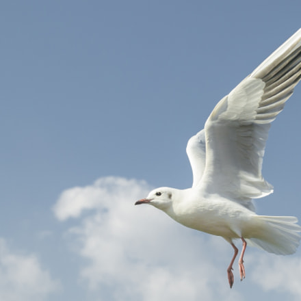 Sea gull in DianChi