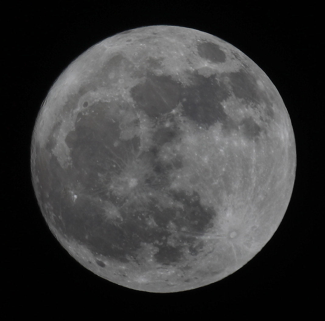 Photograph Full Moon, DUH! by David F. Brown on 500px