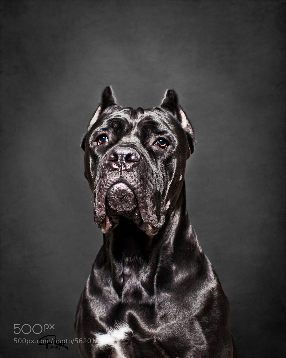 Photograph Dog=God by Robyn Arouty on 500px