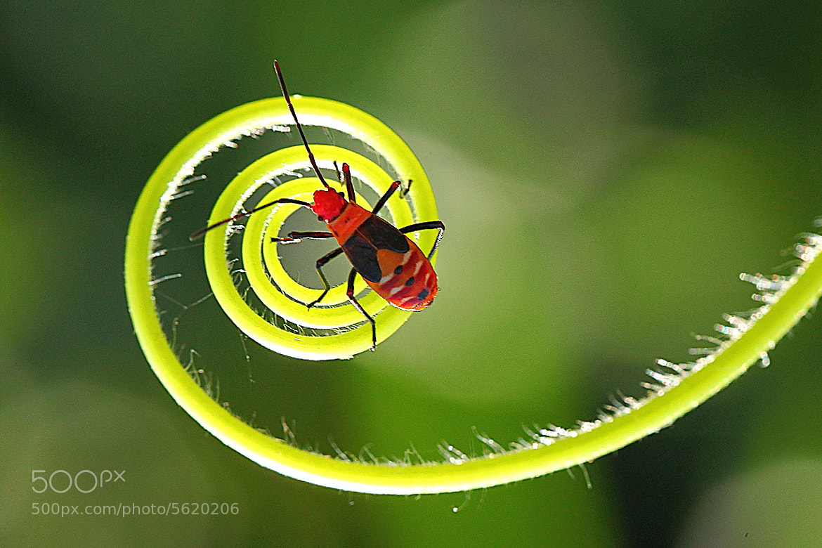 Photograph spiral by Narsiskus Tedy on 500px