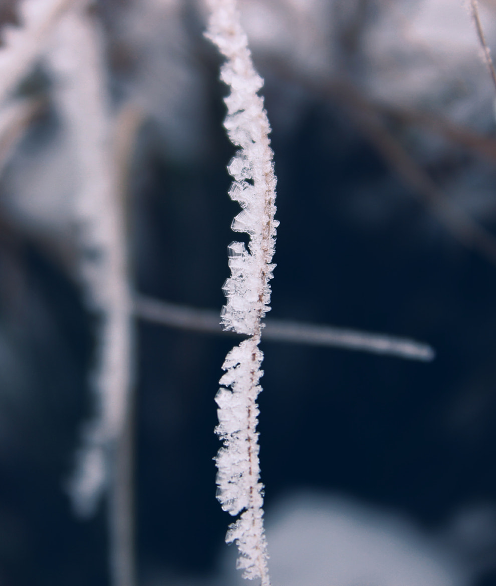 Photograph Frozen by Christopher  Hassler on 500px