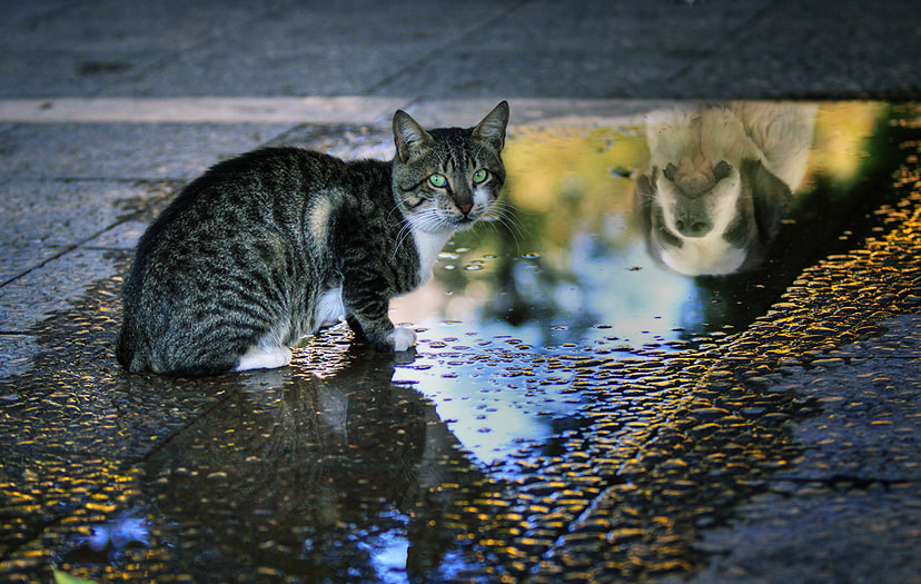 Photograph Cat and puddle by Robertino Kotev - rokoko on 500px