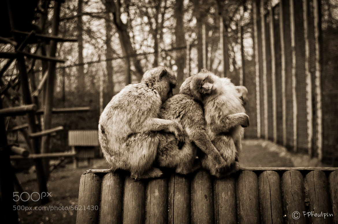 Photograph We stick together by Francois Pheulpin on 500px